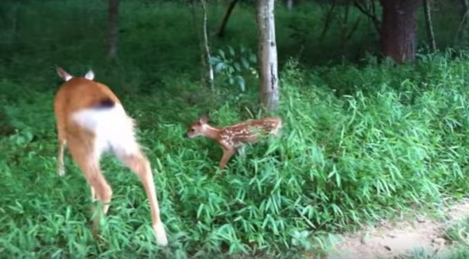 "Amy Carrickhoff Yells ""Little Girl"" Into Woods, Deer Runs Toward Her"