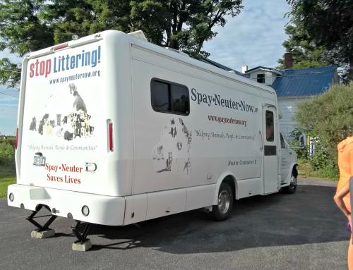 spay neuter now