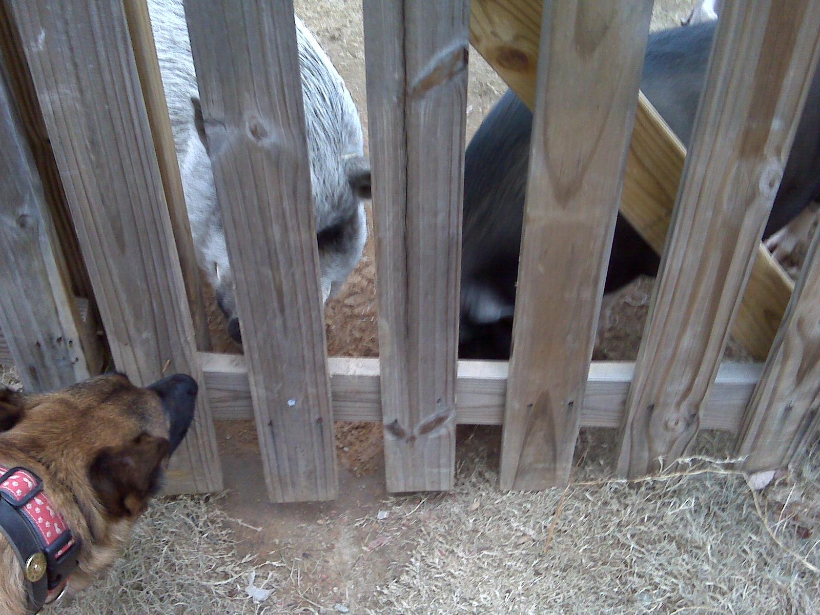 leinie-pigs