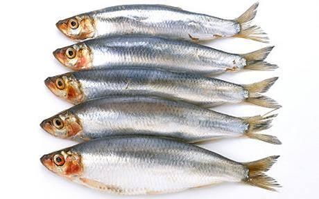 Omega-3 zsírsavak étrendi jelentősége