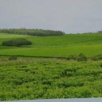 Kakara highland tea