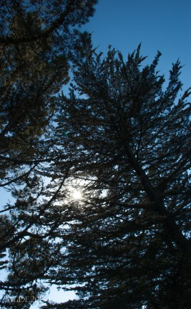 Pine trees at the top of the hill