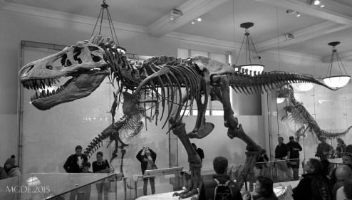 I visited T. Rex, he's asleep!