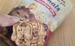 可愛い動物型クッキー Barbara's Bakery Snackimals Animal Cookies Chocolate Chip