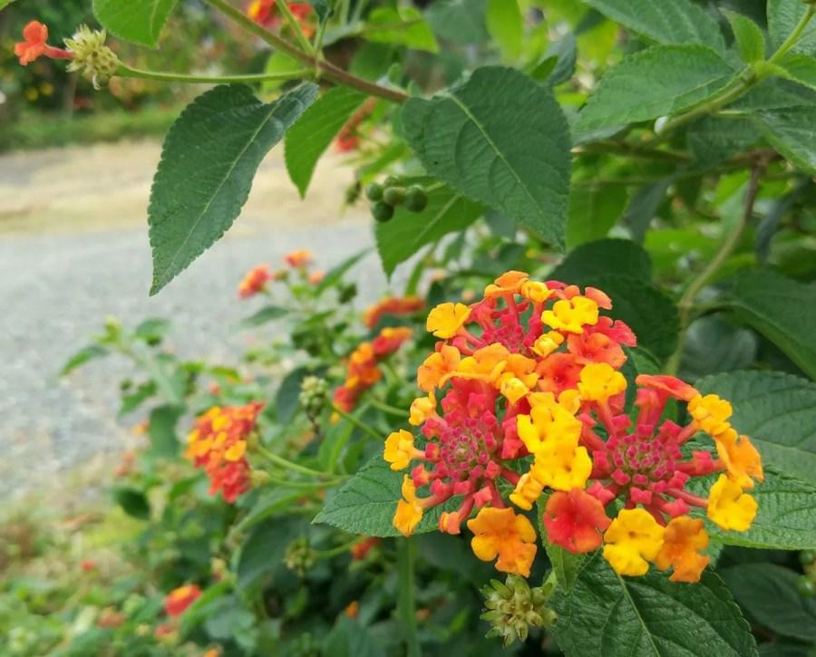 可愛い花の写真
