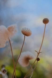 garden-fall