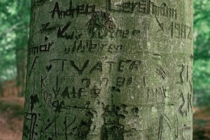 Tree trunks with carved names