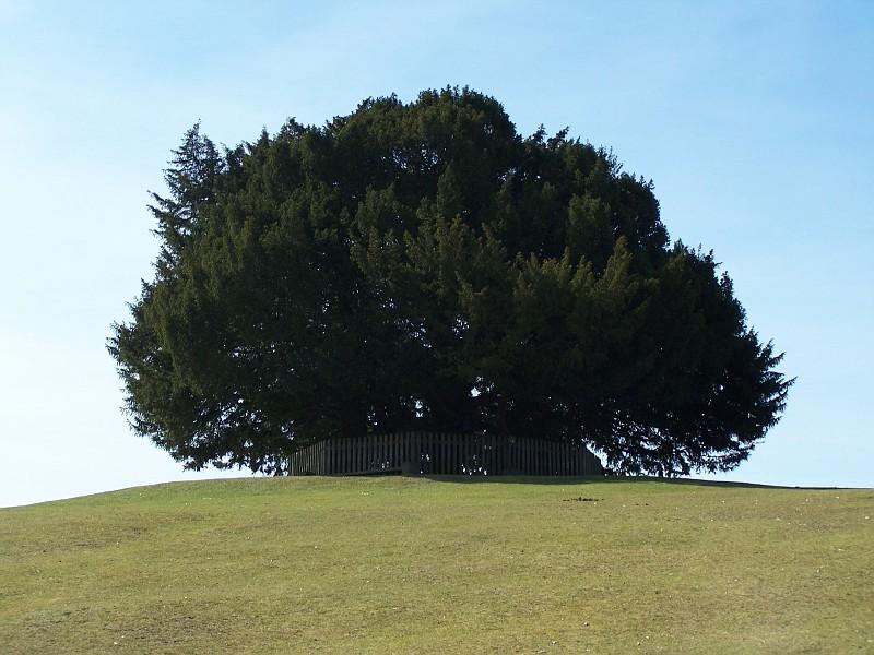 treesfence