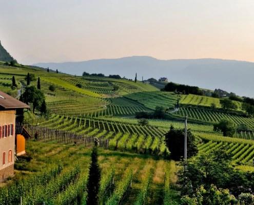 vitigni più diffusi in Lombardia