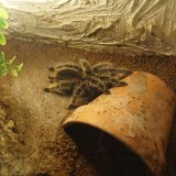 tarantula enclosure