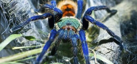 greenbottle blue