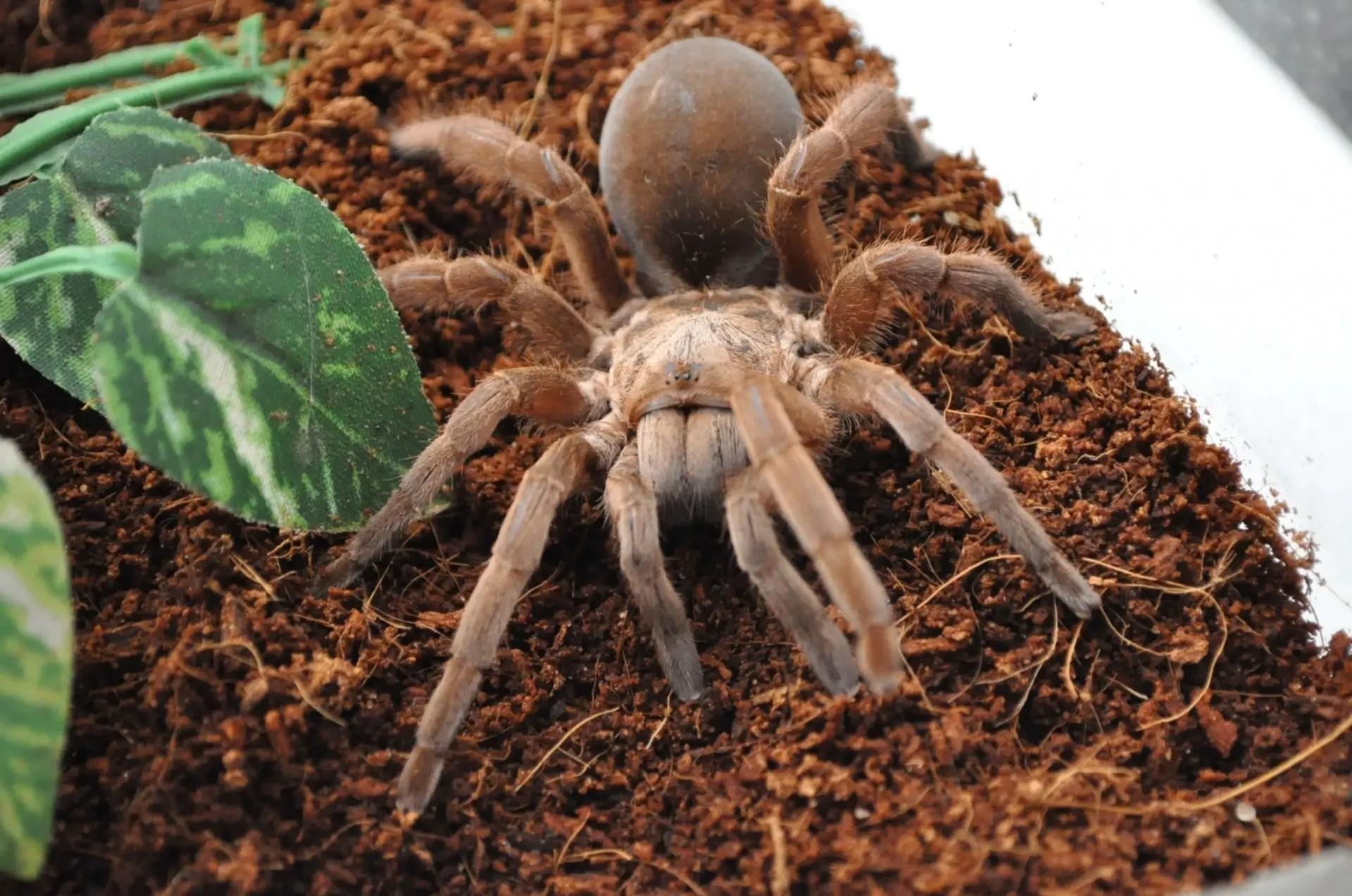 Tarantula Habitat Tarantula Friendly