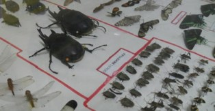 tarapoto-insects-peru