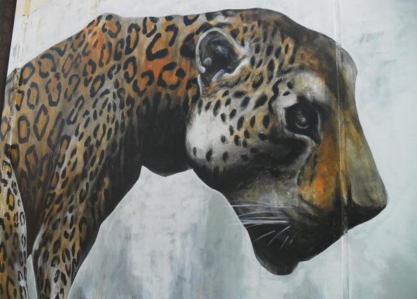 Evoca1 jaguar in Tarapoto, Peru