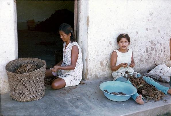 Tarapotinos or Lamistas