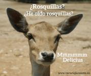 """Receta rosquillas """"delicius"""""""
