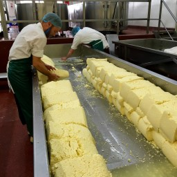 Cheese making at Quicke's
