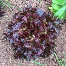 Shillingford Organic Farm