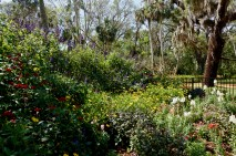 A flower garden has began to flourish as spring has arrived in the Washington Oaks Gardens in Palm Coast, Florida on Wednesday, March 29, 2017. In 1965, subsequently after the death of Owen Young, Louise Young gave the majority of the land to the state of Florida.