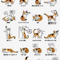 初めて猫を飼われる方に見て欲しい「ボディーランゲージ」