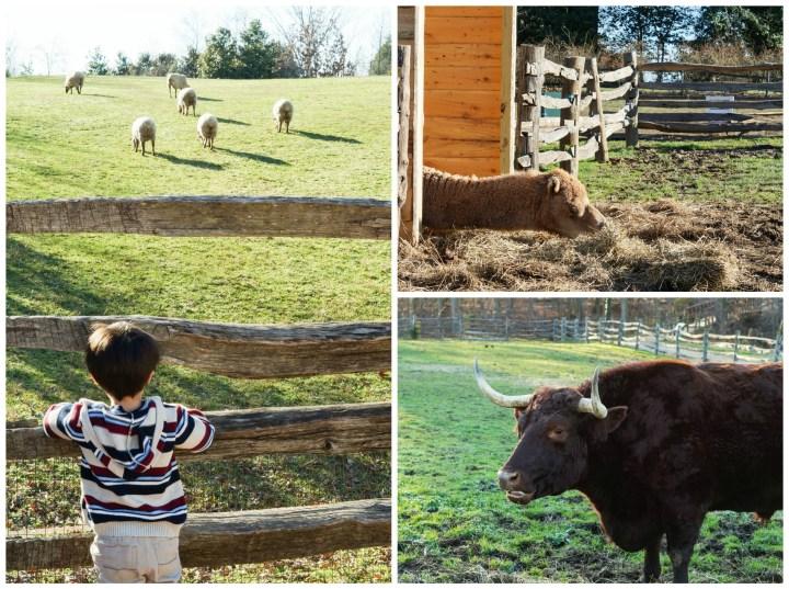 Mount Vernon Animals