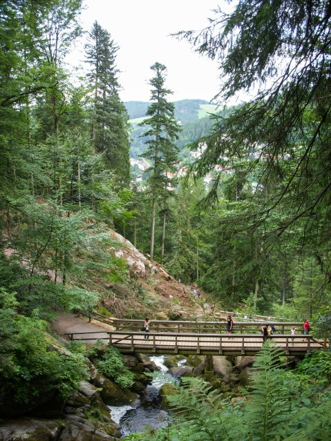 Forest filled with trees and a wooden bridge over a river