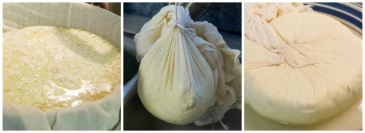 Forming the Paneer Cheese by tying in cheesecloth.