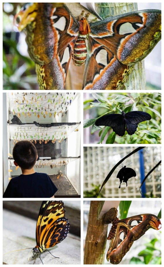 Butterflies! exhibit at the Academy of Natural Sciences with close ups of butterflies and moths.