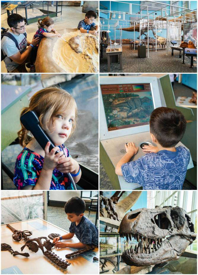 Hands-on exhibits in the Dinosaur Mysteries section of the Maryland Science Center.