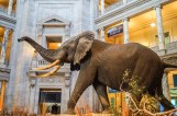 Washington DC: Smithsonian National Museum of Natural History