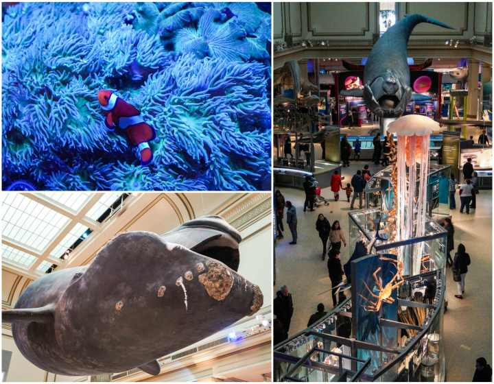 Sant Ocean Hall at the Smithsonian National Museum of Natural History with a right whale hanging from the ceiling, clownfish, and looking down on the exhibits.