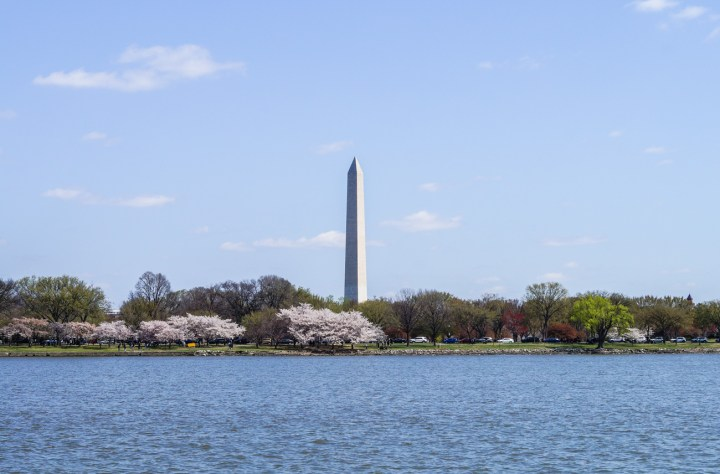 Washington Monument photo taken from the water. Surrounded by cherry blossom and green trees