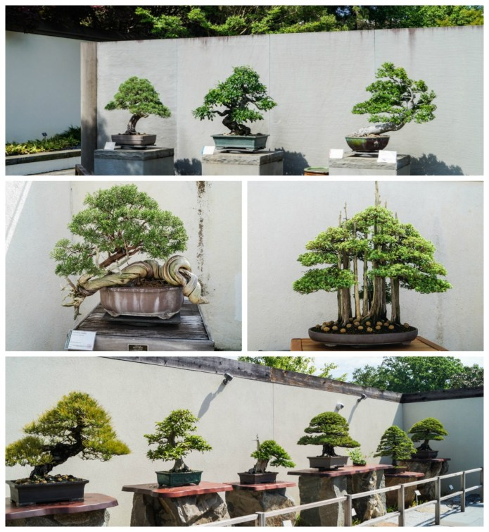 A collection of bonsai trees at the United States National Arboretum