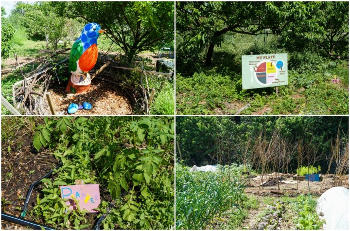 Youth Garden at the United States National Arboretum with vegetables, my plate sign, and a colorful bird statue with red, green, and blue.