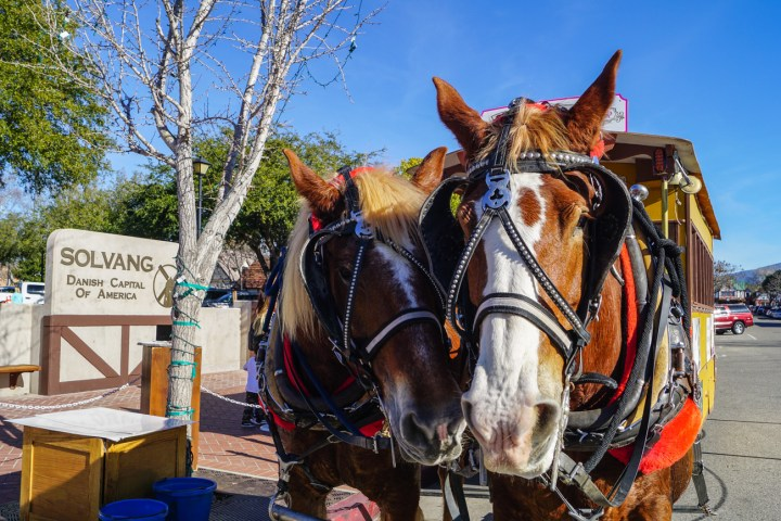 Two horses standing next to a sign- Solvang: Danish Capitol of America.