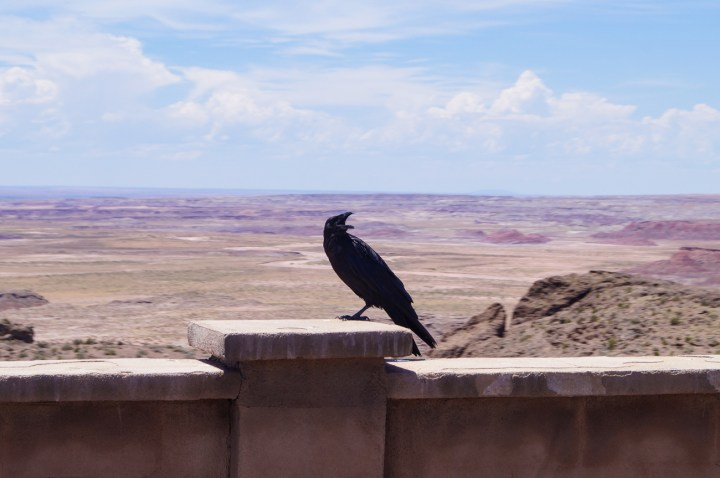 Black raven sitting on wall