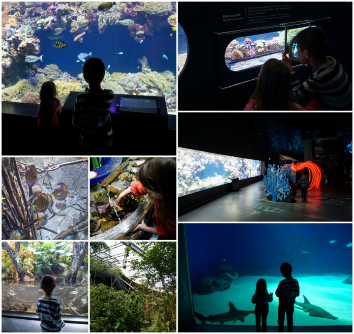 Fish exhibits inside Den Blå Planet
