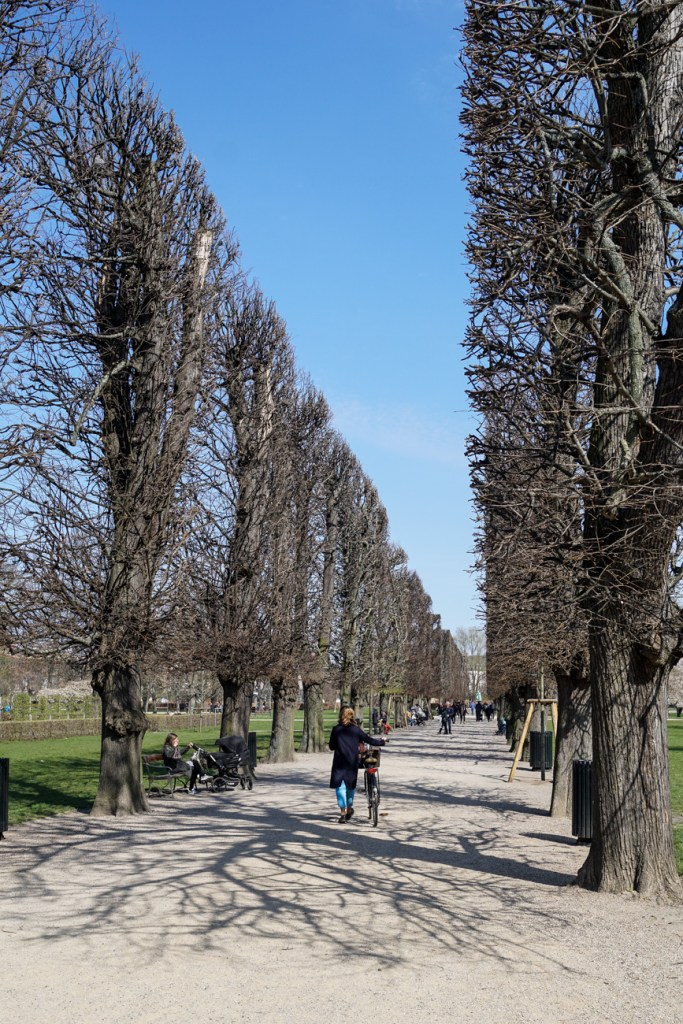 Rows of trees along a walkway