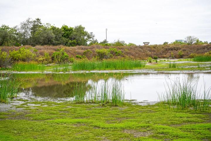 Marshland at San Joaquin Wildlife Sanctuary.