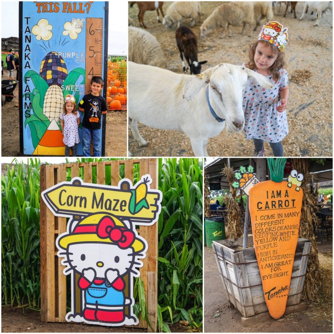 Corn Maze, Carrot Sign, Growth Chart, and petting a goat at Tanaka Farms.