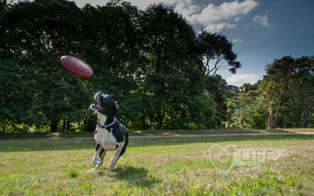 Pet Photography Tips: Lights, Camera, ACTION!