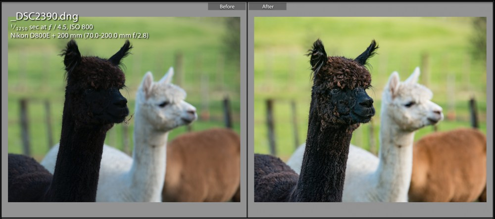 tarasutherland-photographigyouralpaca-Before and After Screenshot