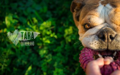 Pet Photography Project 52: 2 – Considering Vision