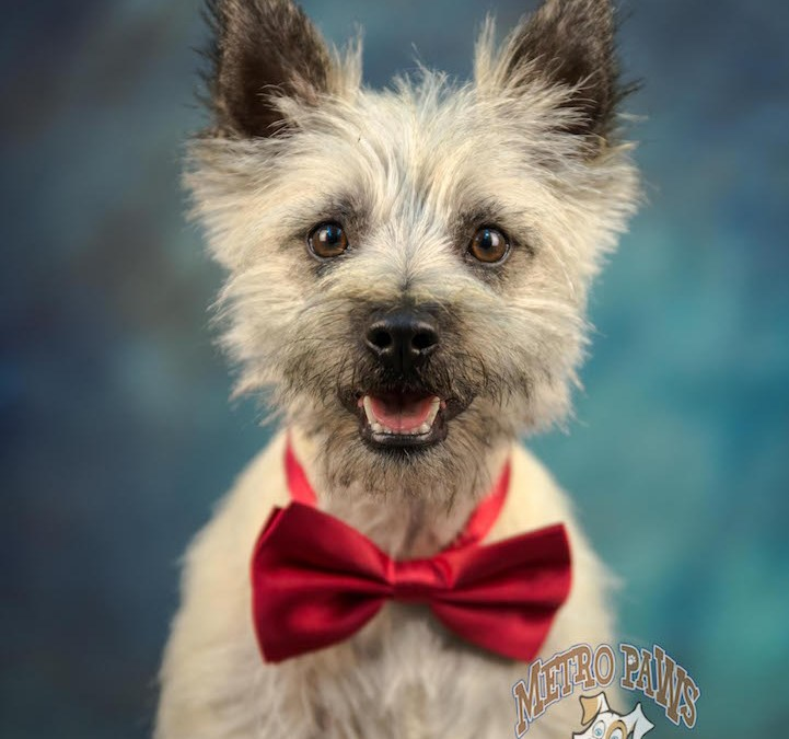 Metro Paws Class of 2016 School PawTraits | Waikato Pet Photography