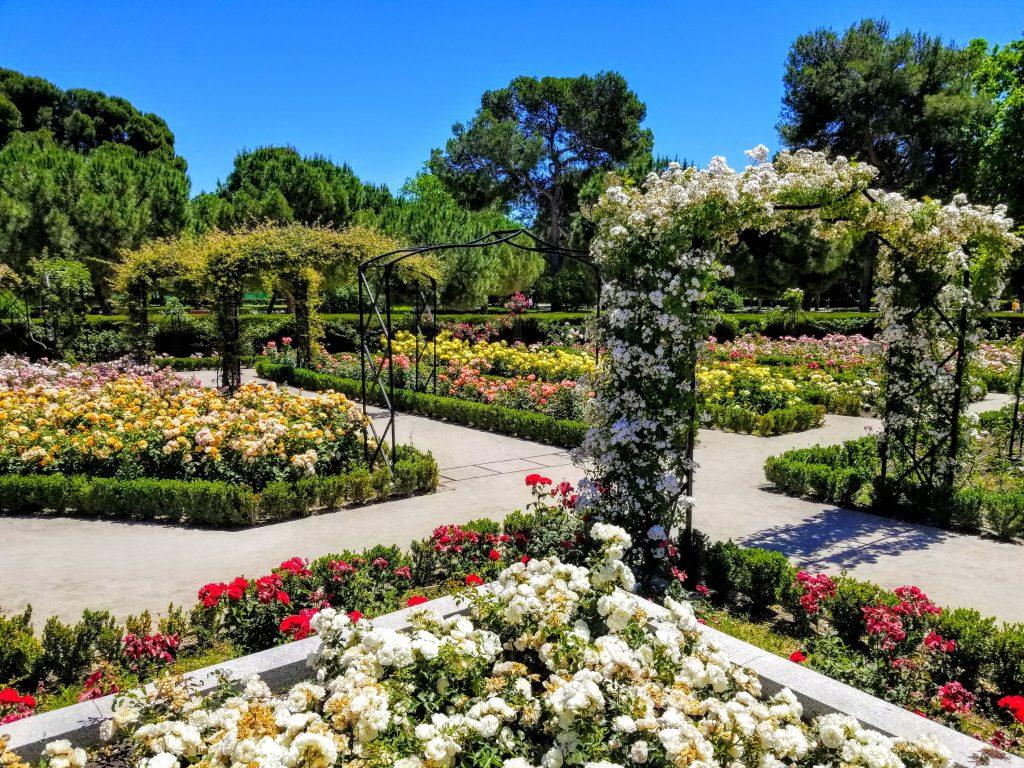 Rose Garden_El Retiro Park Madrid