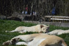 toronto-zoo-may-2016-0833-2