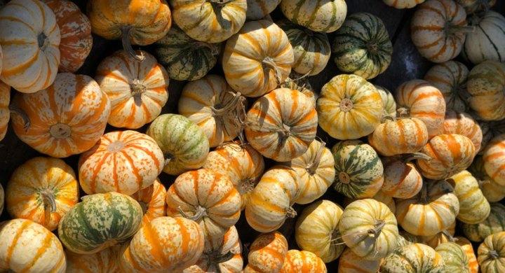 Taren Tooten Fall Pumpkins Stuckey Farm Apple Orchard Cider Mill