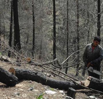 Orman Köylülerine 115 Milyon Liralık Ekonomik Katkı