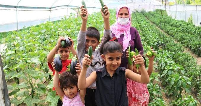 Edremit'te Çiftçiye Verilen Destek Meyvelerini Verdi