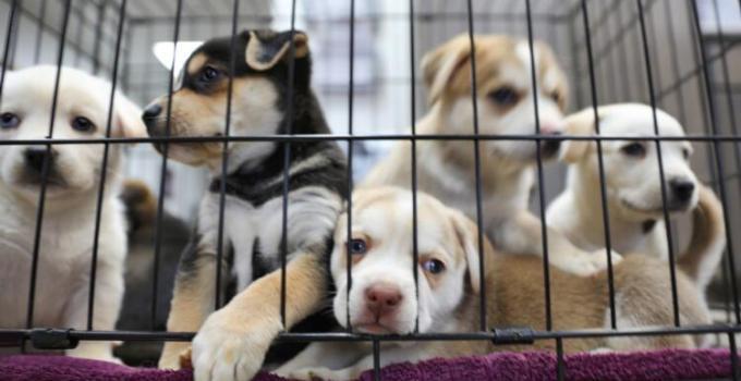 Türkiye'de Hayvan Hakları: Yeni Yasa Teklifi Neleri Kapsıyor?